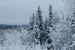 Invierno en las montañas de los Urales meridionales Imagen de archivo