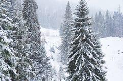 Invierno en los Cárpatos ucranianos Imagen de archivo libre de regalías