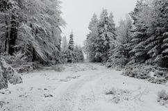 Invierno en montañas en día cubierto de niebla Imagen de archivo