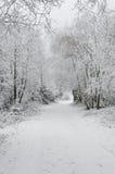 Invierno en montañas en día cubierto de niebla Imagen de archivo libre de regalías
