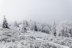 Invierno en montañas en día cubierto de niebla Fotografía de archivo