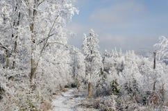Invierno en montañas en día soleado claro Foto de archivo libre de regalías