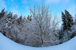 Invierno en naturaleza foto de archivo libre de regalías