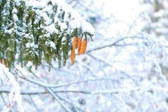 Invierno en naturaleza fotos de archivo