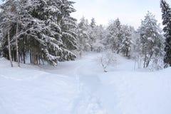 Invierno en naturaleza fotografía de archivo libre de regalías
