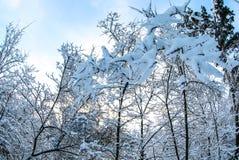 Invierno en naturaleza foto de archivo