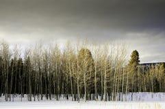 Invierno en New México Foto de archivo