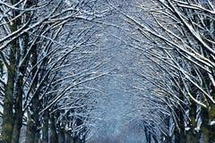 Invierno en parque imágenes de archivo libres de regalías