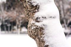 Invierno en parque de la ciudad Fotos de archivo