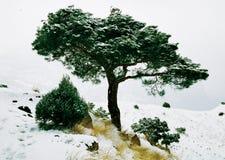 Invierno en pasamontañas Fotos de archivo libres de regalías
