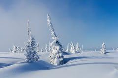 Invierno en Siberia Imágenes de archivo libres de regalías