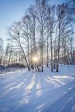 Invierno en Siberia arboleda del abedul en la nieve en la puesta del sol Fotos de archivo