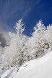 Invierno en una ladera Fotografía de archivo