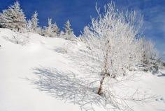 Invierno en una ladera Imagen de archivo libre de regalías