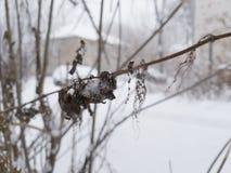 Invierno enero yarda Naturaleza imagen de archivo libre de regalías