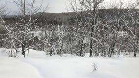 Invierno entre los árboles Foto de archivo libre de regalías