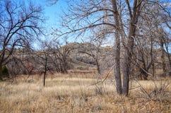 Invierno escénico de Forest Floor en el parque de estado del pueblo del lago, Colorado Imágenes de archivo libres de regalías
