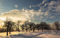 Invierno escarchado con puesta del sol Imagen de archivo
