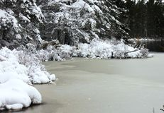 Invierno, escena, paisaje Fotos de archivo libres de regalías