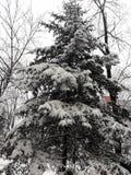 Invierno fabuloso Cuento de los inviernos Hermoso del año fotos de archivo
