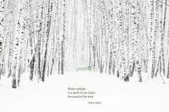 Invierno Forest Haiku Imagenes de archivo