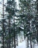 Invierno Forest Trail Imágenes de archivo libres de regalías