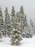 Invierno Forrest Fotos de archivo libres de regalías