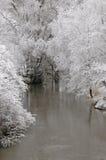 Invierno Forrest de River Fotos de archivo libres de regalías