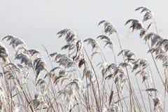 Invierno frío foto de archivo