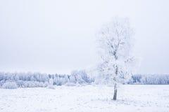 Invierno frío helado en la madera y la tierra escarchadas del bosque Temperaturas del helada en naturaleza Ambiente natural Nevad Fotos de archivo