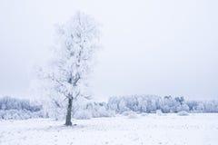Invierno frío helado en la madera y la tierra escarchadas del bosque Temperaturas del helada en naturaleza Ambiente natural Nevad Imagenes de archivo