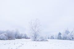Invierno frío helado en la madera y la tierra escarchadas del bosque Temperaturas del helada en naturaleza Ambiente natural Nevad Foto de archivo