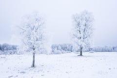 Invierno frío helado en la madera y la tierra escarchadas del bosque Temperaturas del helada en naturaleza Ambiente natural Nevad Imagen de archivo libre de regalías