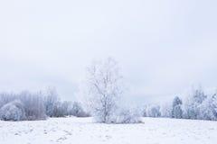 Invierno frío helado en la madera y la tierra escarchadas del bosque Temperaturas del helada en naturaleza Ambiente natural Nevad Fotos de archivo libres de regalías
