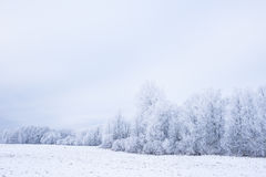 Invierno frío helado en la madera y la tierra escarchadas del bosque Temperaturas del helada en naturaleza Ambiente natural Nevad Fotografía de archivo