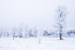 Invierno frío helado en la madera y la tierra escarchadas del bosque Temperaturas del helada en naturaleza Ambiente natural Nevad Imágenes de archivo libres de regalías