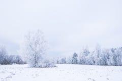 Invierno frío helado en la madera y la tierra escarchadas del bosque Temperaturas del helada en naturaleza Ambiente natural Nevad Foto de archivo libre de regalías