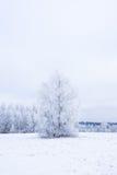 Invierno frío helado en la madera y la tierra escarchadas del bosque Temperaturas del helada en naturaleza Ambiente natural Nevad Fotografía de archivo libre de regalías