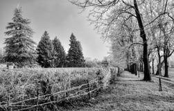 Invierno Frost en árboles de pino en Francia imágenes de archivo libres de regalías