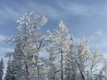Invierno hermoso Fotos de archivo libres de regalías