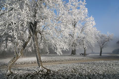 Invierno hermoso Fotos de archivo
