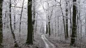 Invierno hermoso Forest Scenery - sendero que lleva a través de un bosque nevoso con los árboles congelados fotos de archivo libres de regalías