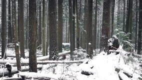 Invierno hermoso Forest In Snowfall almacen de video