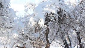 Invierno Lanscape almacen de metraje de vídeo