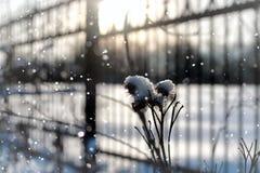 Invierno macro del árbol de la hierba de la nieve de Lanscape Fotos de archivo libres de regalías