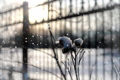Invierno macro del árbol de la hierba de la nieve de Lanscape Imágenes de archivo libres de regalías