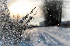 Invierno macro del árbol de la hierba de la nieve de Lanscape Fotografía de archivo