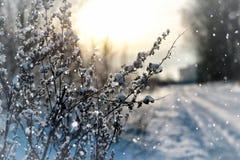 Invierno macro del árbol de la hierba de la nieve de Lanscape Imagen de archivo