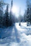 Invierno maravilloso Foto de archivo libre de regalías
