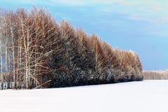 Invierno, mentiras de la nieve, árboles del invierno, foto de archivo libre de regalías